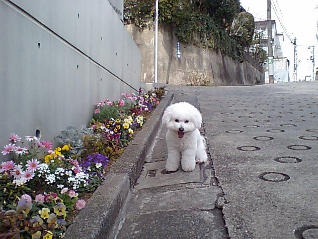 http://www.musicasa.co.jp/blanc_blog/110314_kadan.JPG