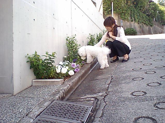 http://www.musicasa.co.jp/blanc_blog/110519blamayu.JPG