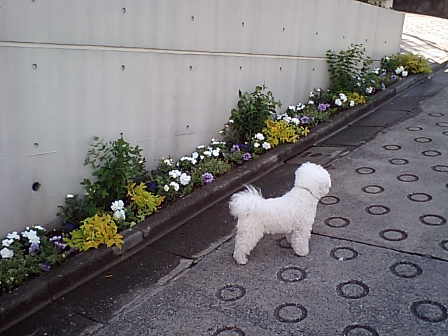 http://www.musicasa.co.jp/blanc_blog/110519kadan.JPG