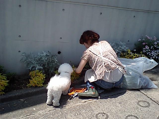 http://www.musicasa.co.jp/blanc_blog/110519mugihana1.JPG