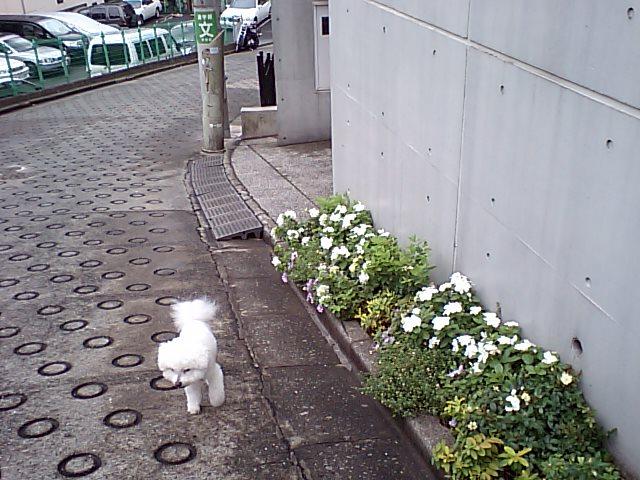 http://www.musicasa.co.jp/blanc_blog/110803_1.JPG