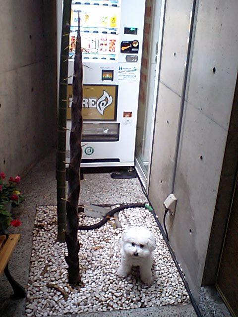 http://www.musicasa.co.jp/blanc_blog/20100505.JPG