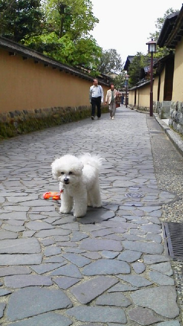 http://www.musicasa.co.jp/blanc_blog/2011050211240000.jpg