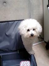 071123_スーツケース.JPG